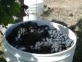 Around the Vineyard