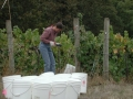 volunteerharvesterpinotnoir