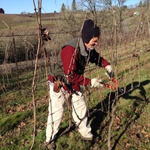 Pruning Tempranillo